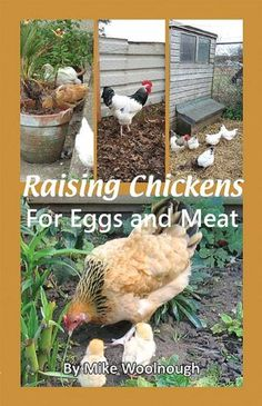 Raising Chickens for Eggs & Meat