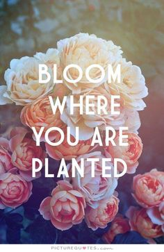 Bloom+where+you+are+planted. Inspirational quotes on PictureQuotes.com.