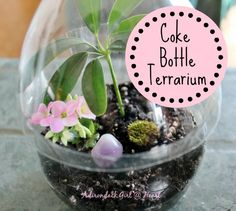 Learn the steps you need to take to make a Coke bottle terrarium in a few easy steps. It's not like your average soda bottle terrarium! Terrarium Diy, Miniature Terrarium, Bottle Terrarium, How To Make Terrariums, Plastic Terrarium, Terrarium Centerpiece, Terrarium Wedding, Soda Bottles, Plastic Bottles