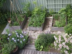 kleingarten anlegen hochbeete gemüse iris holz gartenzaun