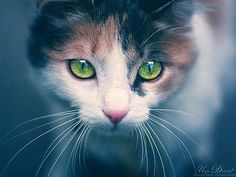 Gorgeous Amazing Cat Eyes