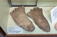 Copies of various Bigfoot foot casts made by pioneer Bigfoot investigator Bob Titmus are on display in the Bigfoot collection at the Willow Creek China Flat Museum in Willow Creek, Calif., on Saturday, May 2, 2015.  (LiPo Ching/Bay Area News Group)