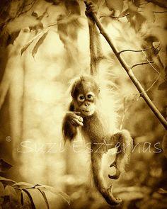 Vintage CUTE BABY ORANGUTAN Photo- 8 X 10 Sepia Print - Baby Animal Photography, Wildlife Photography, Nursery Art, Jungle Zoo, Monkey