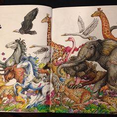 Stampede #animorphia #kerbyrosanes #coloringforadults