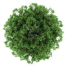 Image Result For Tree Template Photoshop Tree Plan Photoshop Trees Top View Tree Plan Png