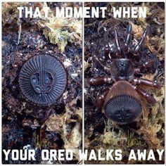 Oh Look An Oreo Funny Image from evilmilk. Oh Look An Oreo was added to the pictures archive on Oreo Funny, Lol, Oreo Cookies, How To Make Shorts, Happy People, Funny Images, In This Moment, Fresh, Strange Animals