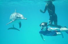 Snorkeling with Dolphins, Marsa Alam tours http://www.shaspo.com/marsa-alam-excursions-and-holidays