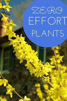 No-effort plants for failproof landscaping in your yard