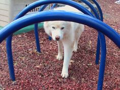 WooFPark is My Dog Playground. I Built for the Pups to play when we are at home!! It can help build confidence because some of the equipment will challenge the pups and make them think!! Its is also a great...