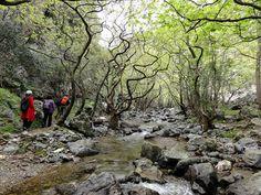 Kollita Gorge, village of Argyroupoli, Prefecture of Rethymno. https://www.facebook.com/SentidoPearlBeach/photos/pcb.828983723815956/828983420482653/?type=1