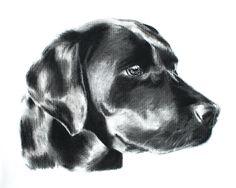 Black Labrador Retriever Art Print by Emily J. Cole | Society6