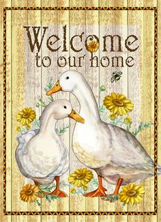 Ducks i welcome to our home