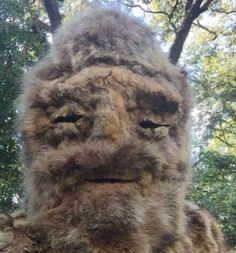 """Gawain MacGregor says his shaman suit led to the 'mistaken identity' says it was him wandering through the forest in North Carolina. He said by dressing in sewn animal skins, and by reciting a """"sasquatch prayer"""", he has had several encounters with the beast. """"It feels like it brings me closer to nature,"""""""