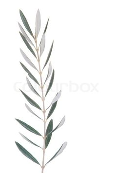 etiquetas para imprimir con hojas de olivo - Buscar con Google