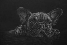 Frenchie in white pencil on black paper