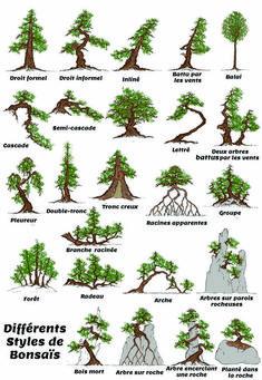 styles-de-bonsais.jpg (600×869)