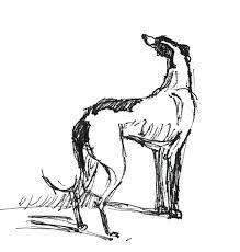 greyhound sketch