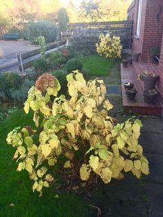Sunnys Haus: Goldener November