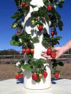 Diy hydroponic gardens for your small house 3170 Brilliant Ideas to Make Vertical Garden with PipesEasily grow up to 20 vegetables, herbs, fruits and flowers in less than 3 sq.—indoors or out—with Tower Garden: a vertical, aeroponic growing syste