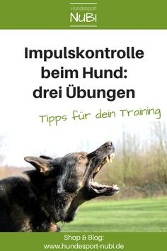 3 Übungen zur Impulskontrolle – wie dein Hund lernt, nicht auszuflippen Impulse control in dogs is important. No matter whether sport dog or family dog. That's why we show you our three favorite exercises that have proven their worth in training. Pet Dogs, Dogs And Puppies, Pets, Dog Test, Protective Dogs, Impulse Control, Learning To Relax, Dog School, Companion Dog