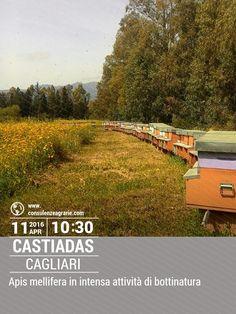 """Apiario Biologico a Castiadas (CA) - Intensa attività di bottinatura su """"millefiori"""". Scopri come ottenere la certificazione BIO per le tue produzioni apistiche."""