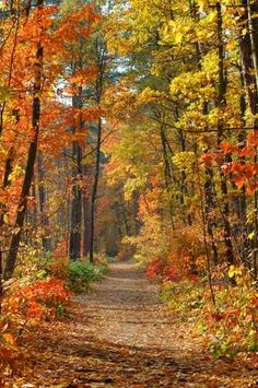 Autumn path...