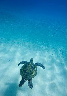 I love turtles - reminds me of Grenada {saw baby turtles being born}