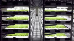 If your goal is to create a stable food supply on Earth, one path to steady, environmentally friendly and readily-available crops is the indoor farm.