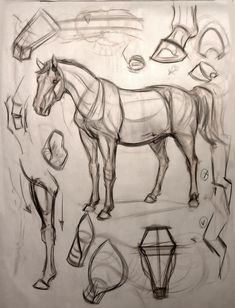 "Animal Art and Demos: February 2012 ""Visit our art shop here . Free and fast delivery - an # art drawing # animal . Horse Drawings, Animal Drawings, Art Drawings, Anatomy Sketches, Anatomy Drawing, Animal Sketches, Art Sketches, Dessin My Little Pony, Horse Anatomy"