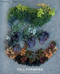 """Garden designer Judy Kameon created this beautiful """"T"""" for New York Times' T Magazine using 130 plants."""
