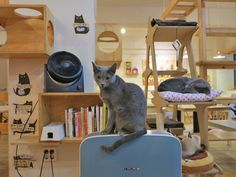 Toronto to get its first cat cafe