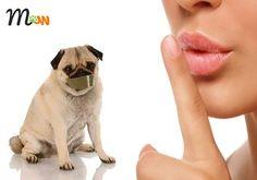 Hoy en el #blog prácticos #consejos para evitar que tu #perro ladre sin parar ☝🐶👏 #mascotas #perro #educación #ladridos #comportamiento
