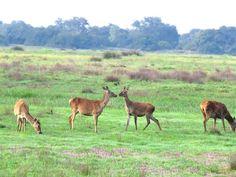 Bienvenido a Doñana Reservas, la web de reserva de visitas guiadas en vehículos todo terreno al interior del Parque Nacional y Natural de Doñana ¡Conócenos!
