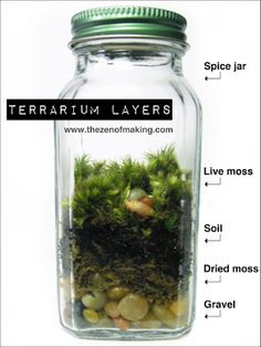 Jar Terrriums Terrarium from spice jars. Also links to many more examples and ideas for DIY terrariumsTerrarium from spice jars. Also links to many more examples and ideas for DIY terrariums Mini Terrarium, Succulent Terrarium, Succulents Garden, Glass Terrarium Ideas, Turtle Terrarium, Terrarium Table, Water Terrarium, Mason Jar Terrarium, Orchid Terrarium