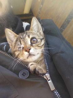 See how one man's kindness saved the life of a tiny kitten. #kittens #cat