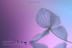 See you in a dream by mugiwarabousi. @go4fotos
