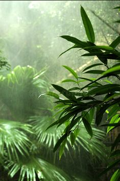 I want to visit a rain forest. , I need to go to a rain forest. I need to go to a rain forest. I need to go to a rain forest. Tropical Forest, Tropical Plants, Rainforest Plants, Amazon Rainforest Trees, Forest Mural, Forest Photography, Ocean Photography, Photography Tips, Wedding Photography