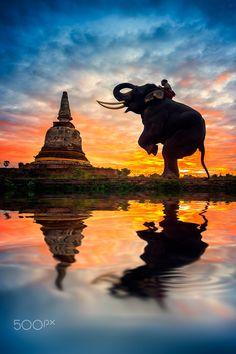 Elephants and stupa at Ayutthaya in Thailand