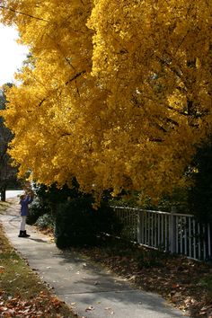 love the yellow ginko tree! www.fiskars.com