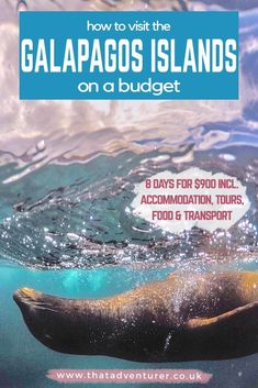 Planning a trip to the Galapagos Islands but think Galapagos Islands travel is too expensive? Here's how you can visit the Galapagos Islands on a budget without a cruise. This guide to a budget friendly Galapagos vacation has everything you need for 8 days on Santa Cruz and Isabela islands in the Galapagos, Ecuador. #galapagosislands #southamericatravel #ecuador
