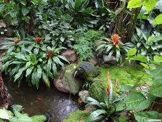 courtyard tropical garden - Google Search                                                                                                                                                                                 More