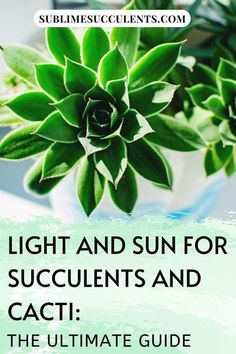 Light and sun for succulents and cacti, The Ultimate Guide. Succulents are sun-loving plants and that's good a thing – it'd be pretty hard to survive in those arid and desert environments without an appreciation for sunshine. Check this pin for a complete guide about light and sun for succulents. #succulentscacti #succulents #sun #light #cacti