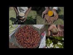 Medicinal Rice P5L Formulations for Aidia Excess: Pankaj Oudhia's Medici...