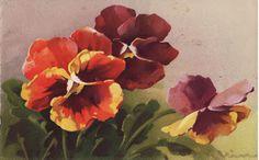 Purple, orange, yellow pansies by C. Klein