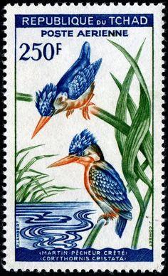 Corythornis Cristata (Malachite kingfisher). Stamp by Republic of Chad, circa 1961