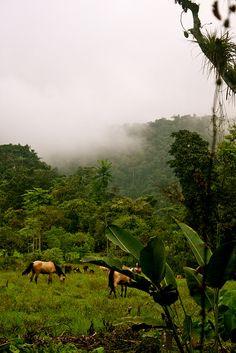 Cloud Forest Santa Domingo, Bolivar, Equador