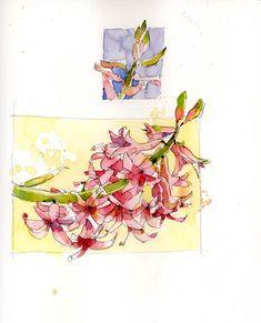 http://shariblaukopf.files.wordpress.com/2014/03/hyacinth.jpg