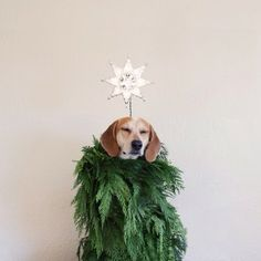 6 Cute Pets to Help You Pack Up from the Holidays | Sweetsy.com