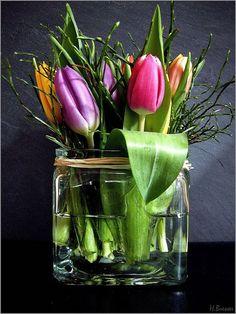 Tulips in a glass vase. My Flower, Fresh Flowers, Spring Flowers, Beautiful Flowers, Glass Flowers, Arrangements Ikebana, Floral Arrangements, Deco Floral, Arte Floral