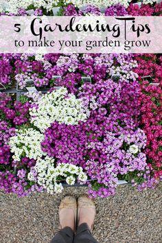 5 Gardening Tips o make your garden grow